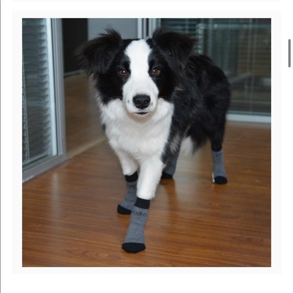 Dog socks for traction. Size XL